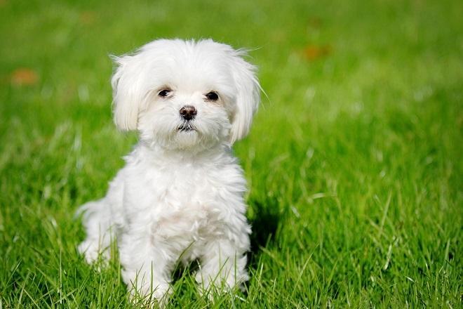 unnamed file 4 - Tả con chó lớp 4 hay nhất