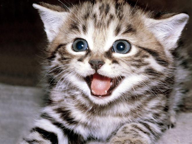 unnamed file 6 - Tả con mèo lớp 4 hay nhất
